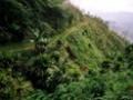 """В джунглях Папуа - Новой Гвинеи обнаружен """"повелитель мух"""""""