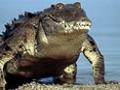В Бангладеш священный аллигатор сожрал паломника